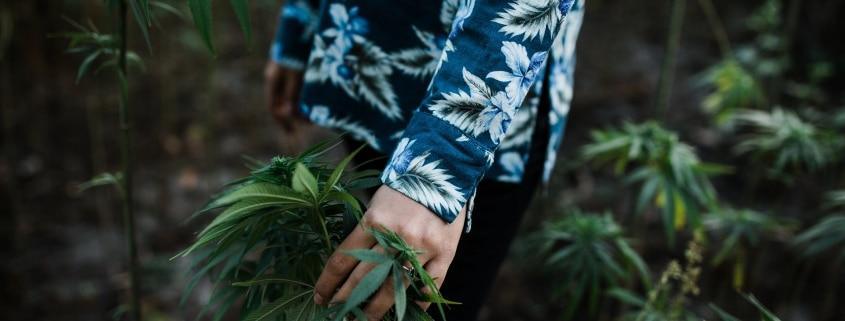 history of hemp cannabis australia