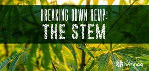 Breaking down Hemp the stem