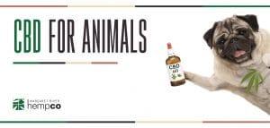 CBD For animals