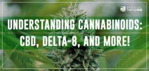 Understanding Cannabinoids