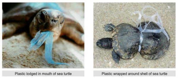 Earth Day: Plastic On Marine Life